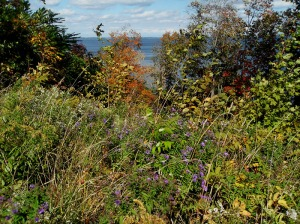 cayuga-lake-wildflowers (2)