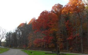 ithaca-trees (2)