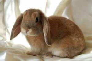 bunny-cute-19