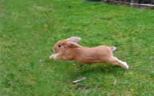 bunny-cute-8