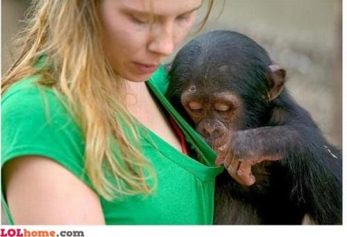 naughty-monkey